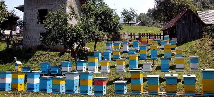 1. Beekeeping in Drina-Tara